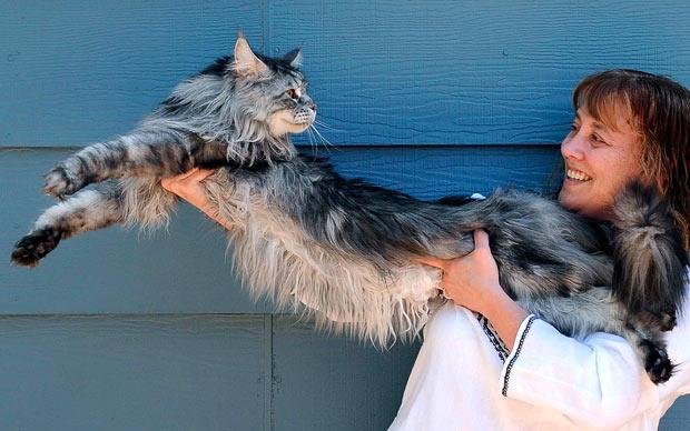 Stewie: The 48.5-inch cat from Nevada.