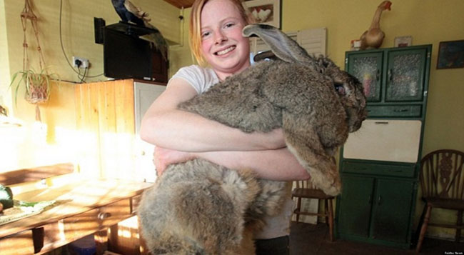 Ralph: The 55-pound rabbit from the UK.