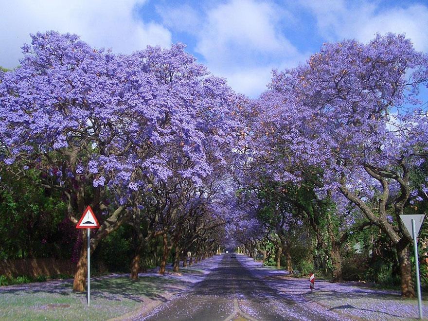 23 Most Beautiful Tree Tunnels in the World. It's Definitely Wonderful. - Thedailytop.com