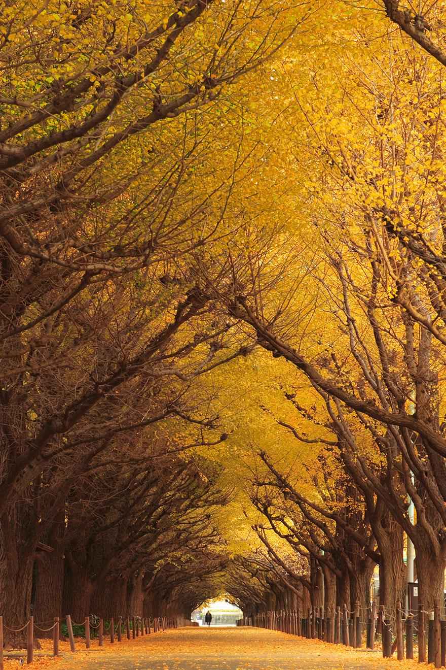 23 most beautiful tree tunnels in the world it�s