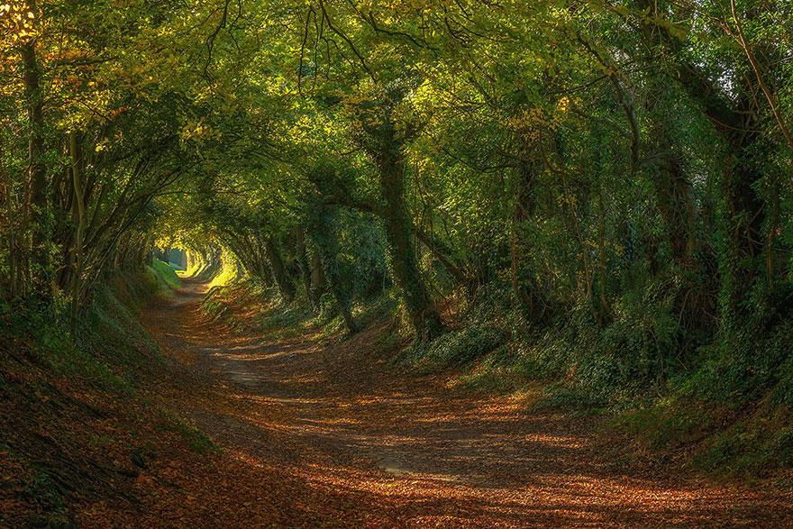 23 Most Beautiful Tree Tunnels In The World It S