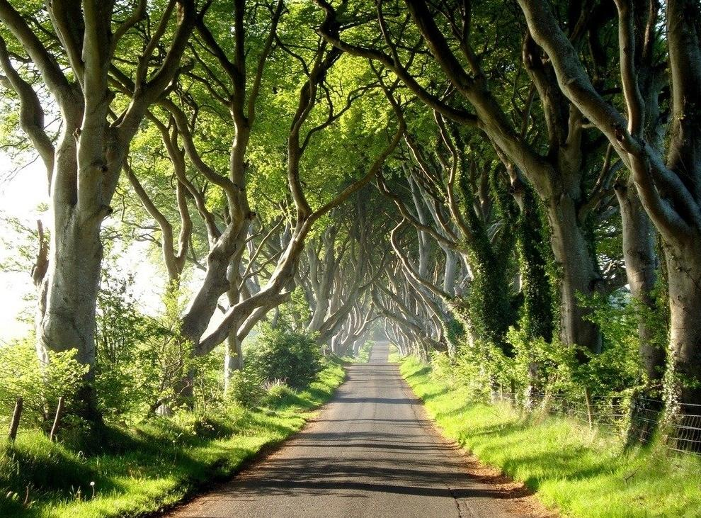 23 most beautiful tree tunnels in the world it s for Around the tree