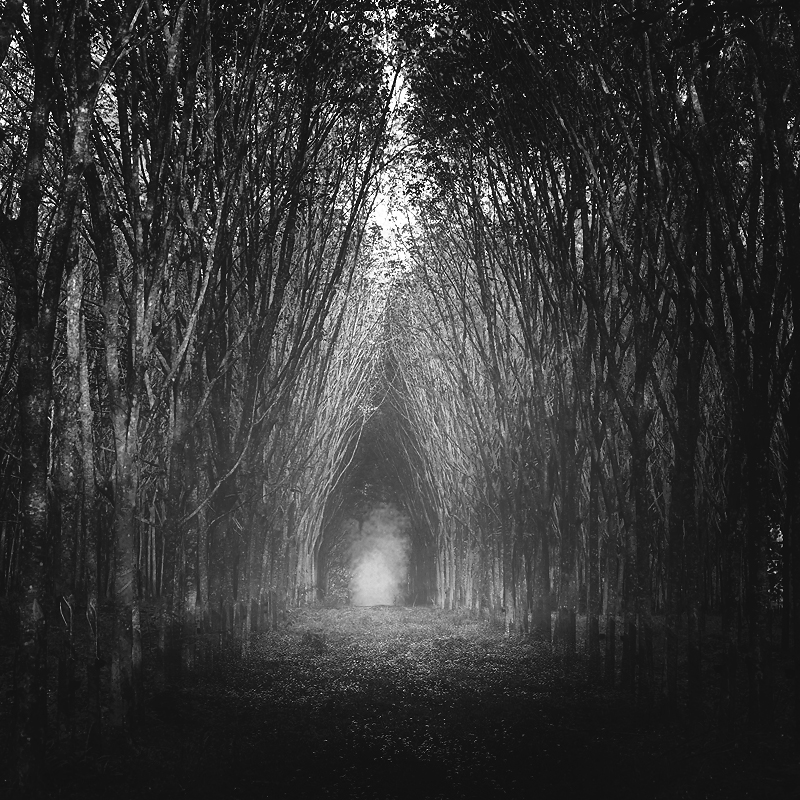 23 Most Beautiful Tree Tunnels In The World. It's