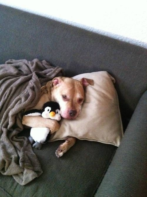 27. When this puppy took a long nap