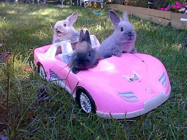 26. When these bunnies went on a joy ride