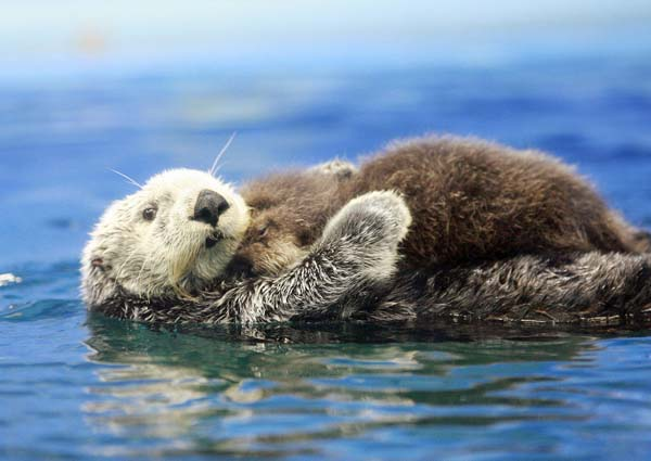 26.) This snuggly otter mom and her baby.