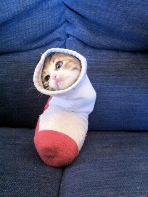 19. When sock cat realized just how adorable he was