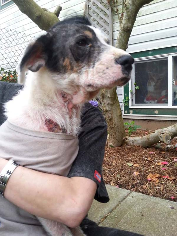 The Difference One Month Makes. How They Save This Dog In Mange