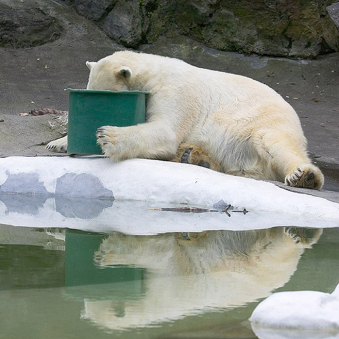 Animals Suffer From Hungover Too!