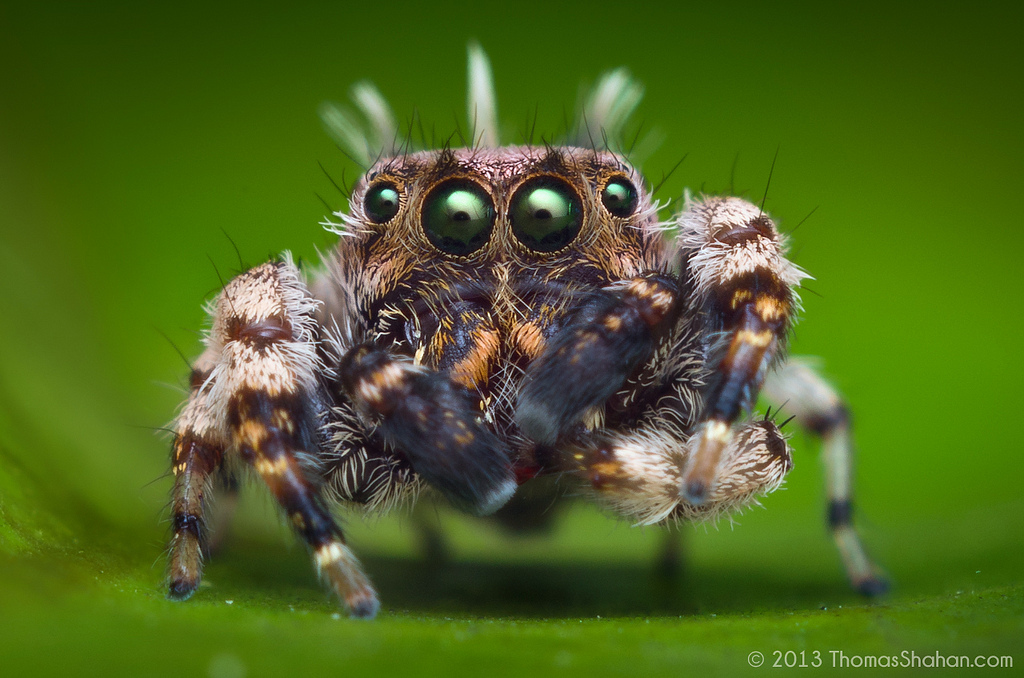 These Are The Most Beautiful Spiders You Will Ever See