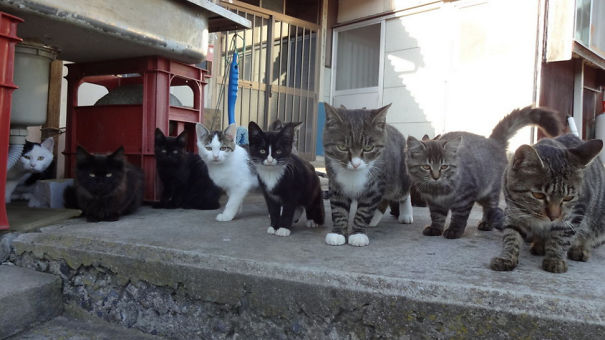 Cats Ruled Two Islands in Japan