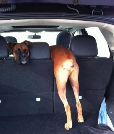 funny pictures you have to look at double dog