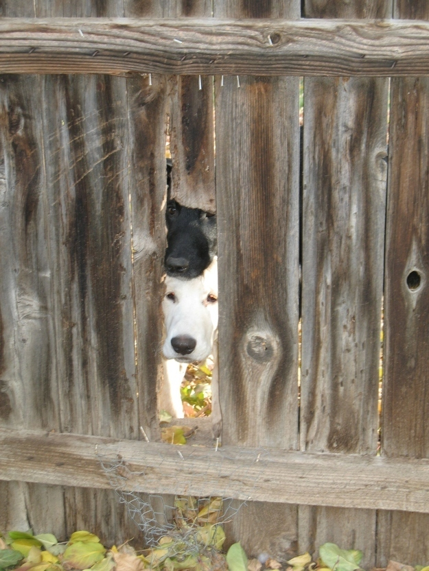 13. When these dogs realized there was another side of the fence