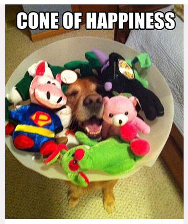 11.) This really, really happy dog.
