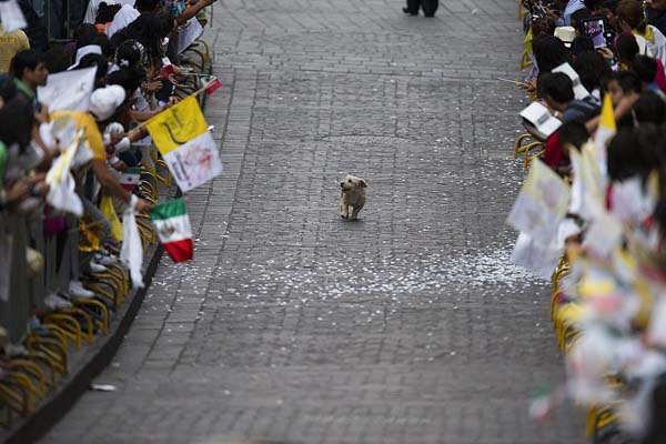 1.) This dog, who thinks this parade is all for him.