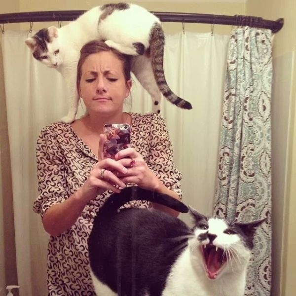 """18. When these cats """"improved"""" their owner's selfie"""
