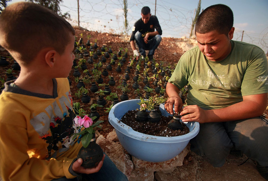 Israeli Army Tear Gas Grenades Were Used To Plant Flowers By A Palestinian Woman