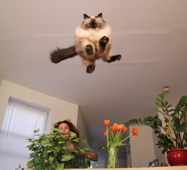 15. When this cat was REALLY ready to play