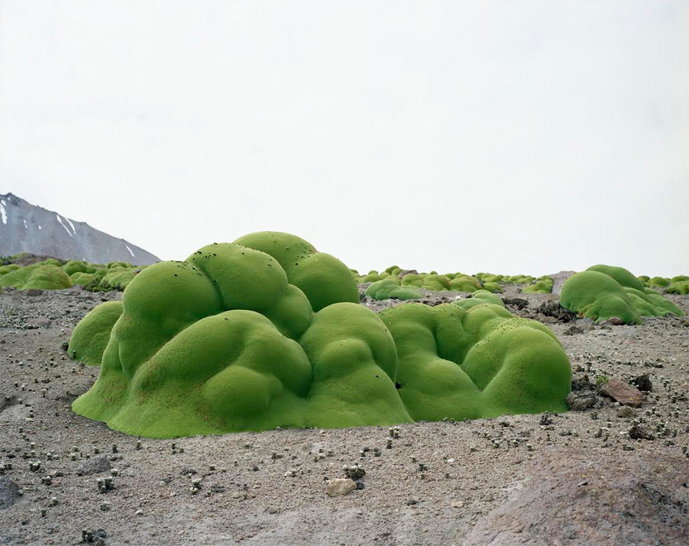 Artist Rachel Sussman Photographs the Oldest Living Things in the World before They Vanish science plants nature history