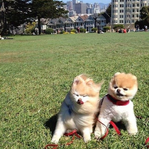 22. When these puppies enjoyed visiting San Francisco