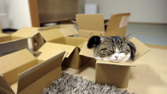 I Stay Wherever I Want: Nothing's Gonna Stop Cats