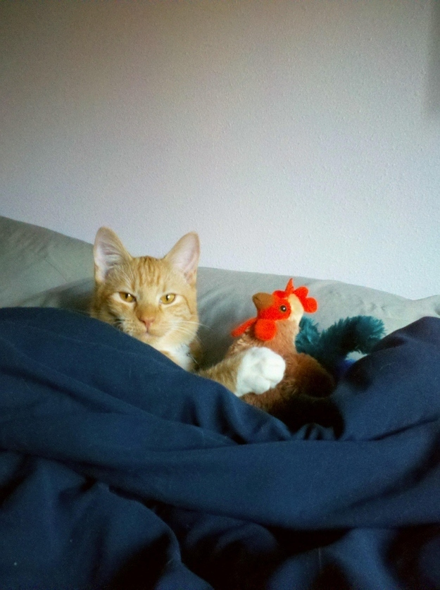 17. When this cat had a cuddle buddy
