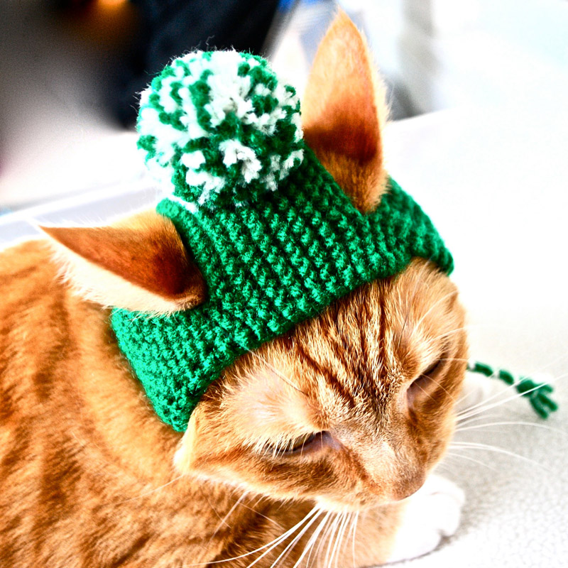 Cats with Their Lovely Hats (1)