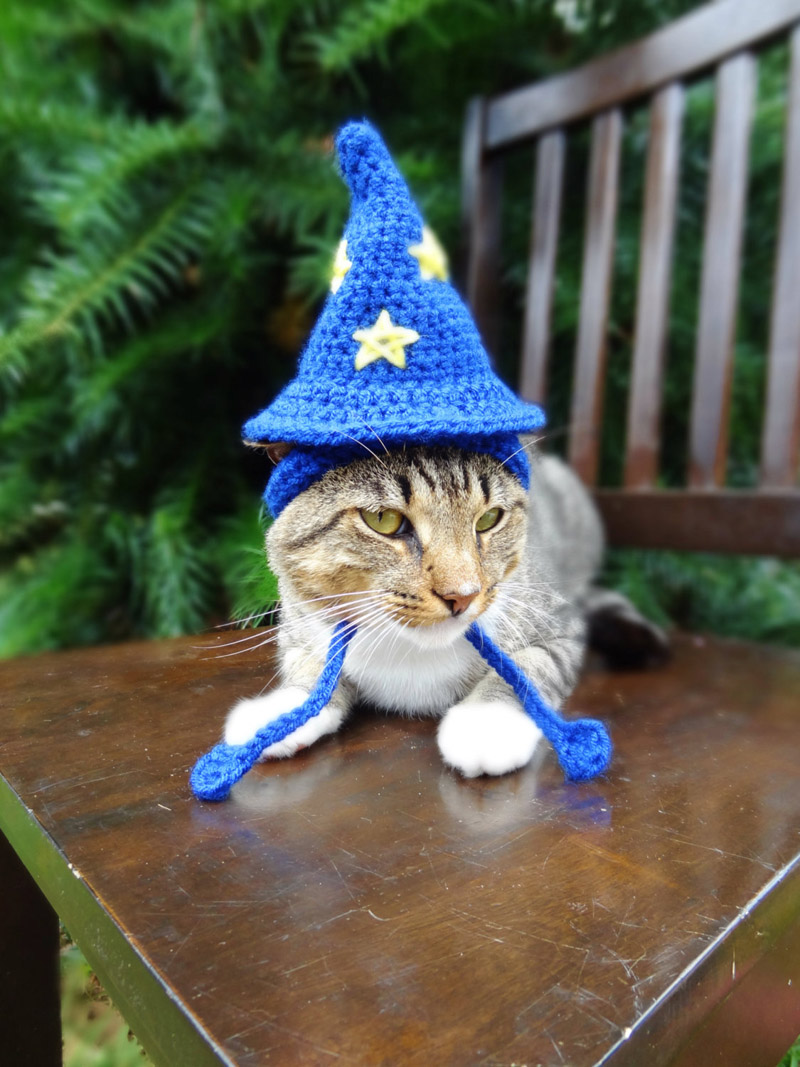 Cats with Their Lovely Hats (2)