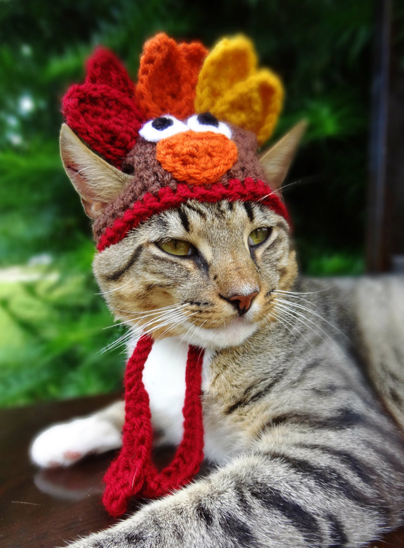Cats with Their Lovely Hats (3)