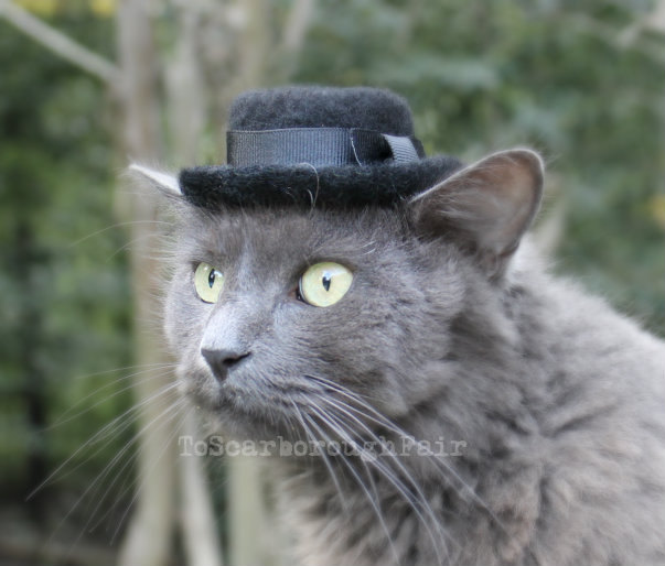 Cats with Their Lovely Hats (4)