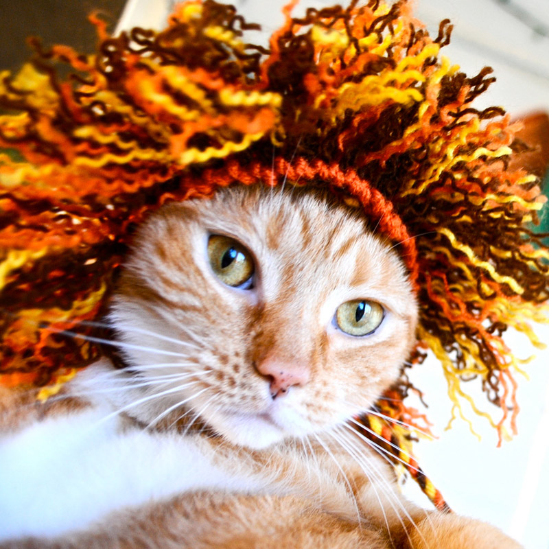 Cats with Their Lovely Hats (5)