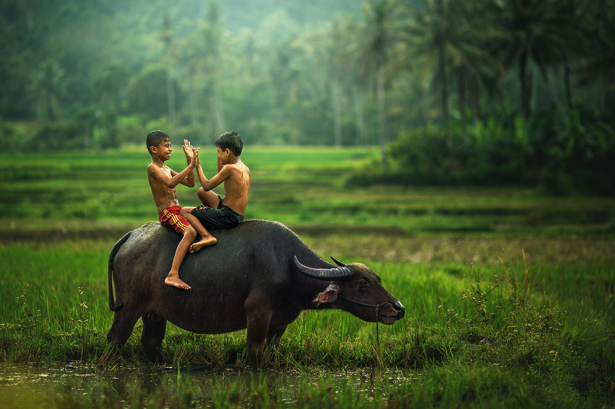 Fascinating And Exotic Pictures Of South Asia (8)