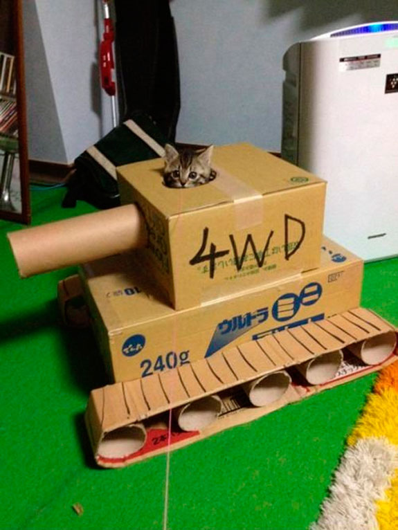 Cats Armed: We're Ready!