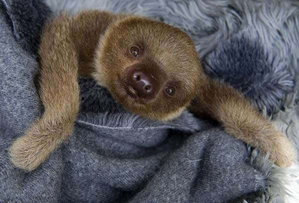 5.) This content sloth.