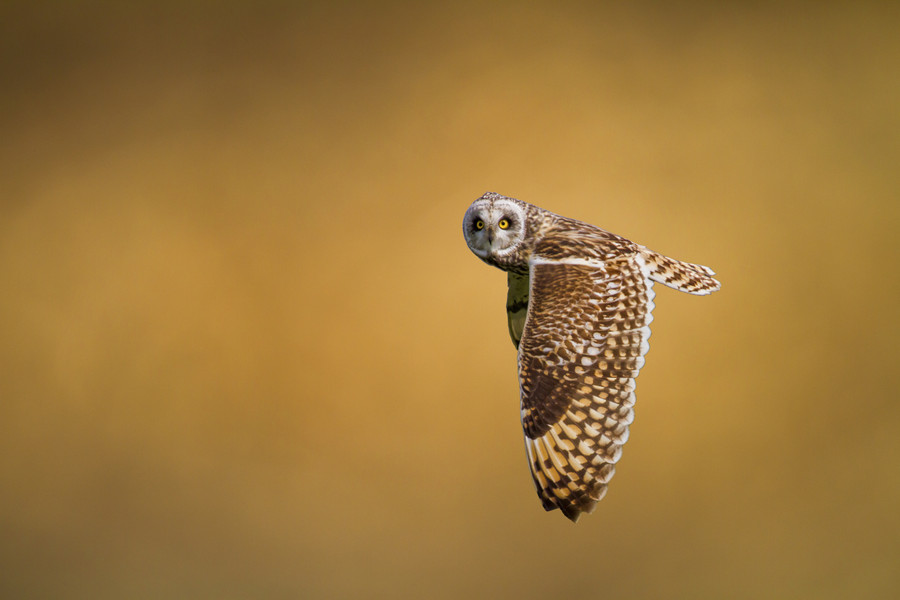 Photograph Look at me! by Marco Redaelli on 500px