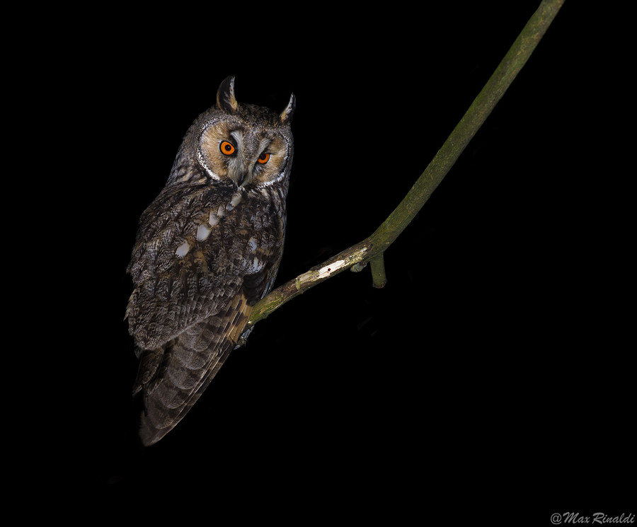 Photograph Lord of the Night by Max Rinaldi on 500px