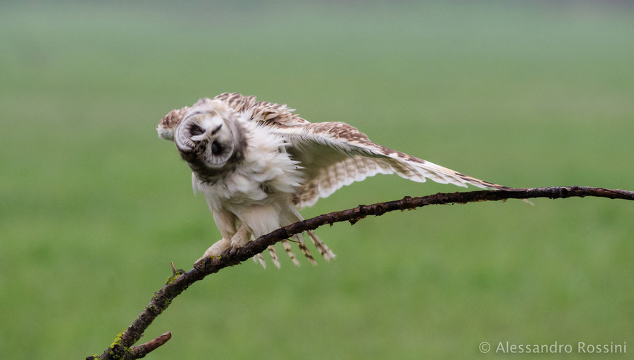 Photograph The exorcism by Alessandro Rossini on 500px