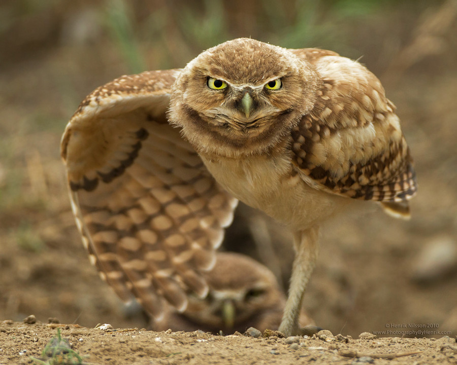 Photograph Go On, Come Closer by Henrik Nilsson on 500px