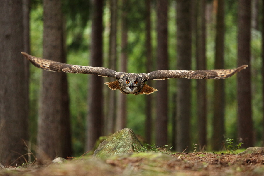 Photograph Air Force made in nature by Jan Drahokoupil on 500px