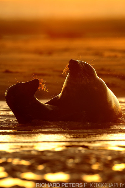 Photograph Sunrise courtship by Richard Peters on 500px