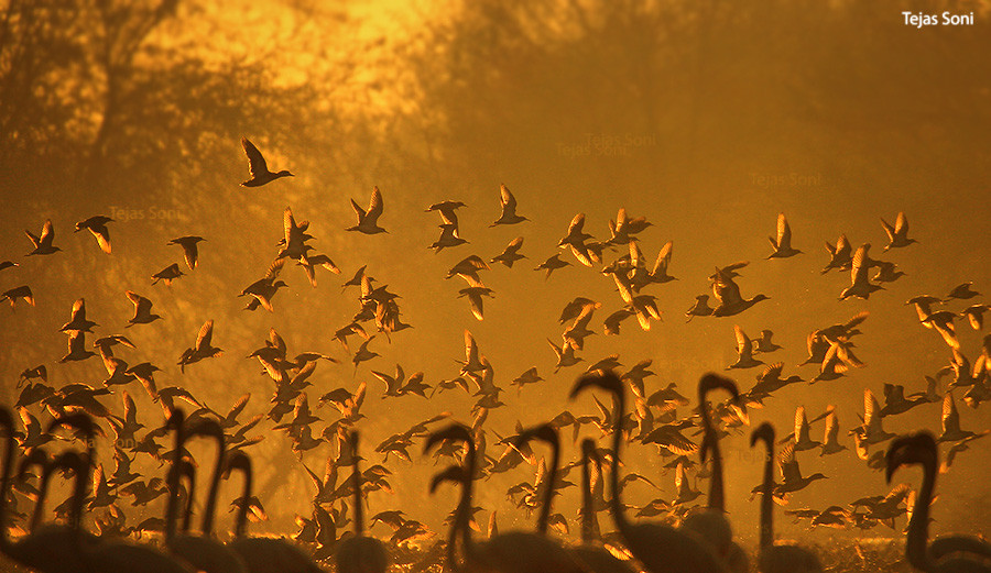 Photograph Morning raga by Tejas Soni on 500px