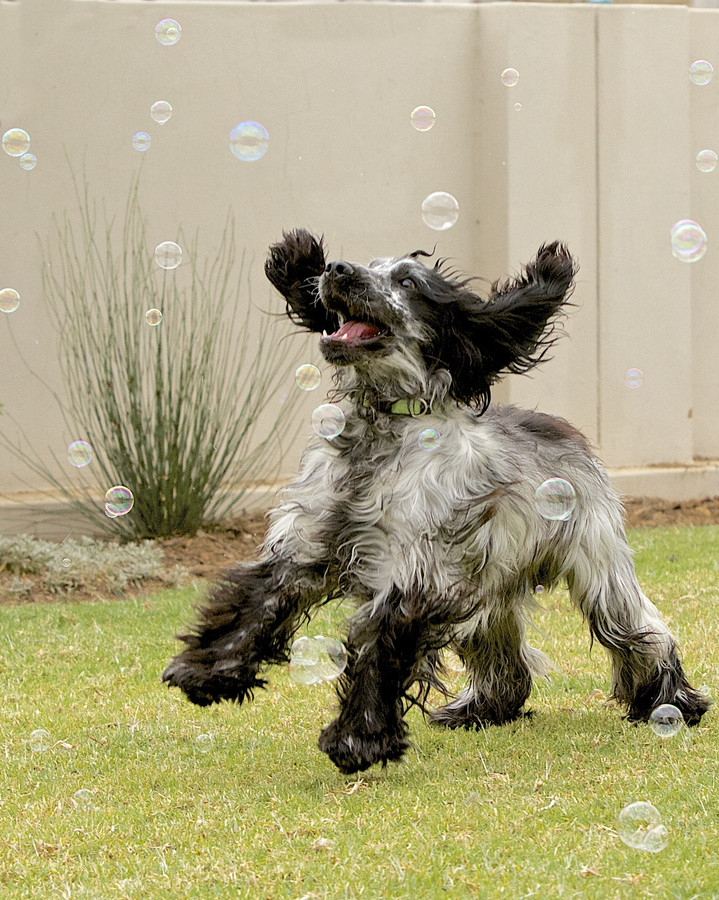 Photograph Fun with bubbles by tbza . on 500px