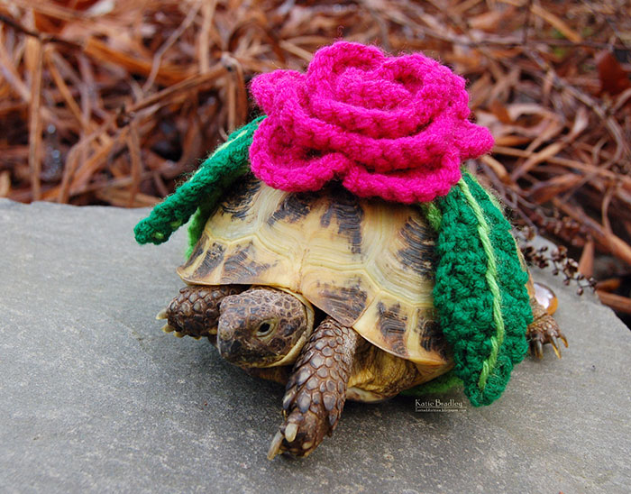 Tortoises with Their Lovable Crochet Cozies