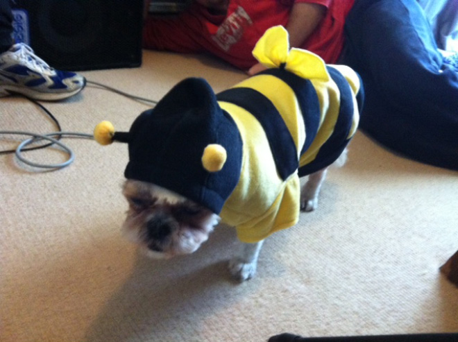 Cats and Dogs in Their Costumes: Stupid Owners!
