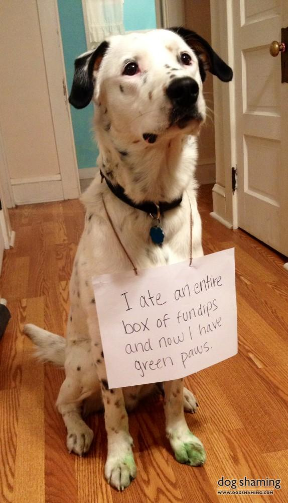 Dog Shaming Most Shameful And Never Before Seen Doggie