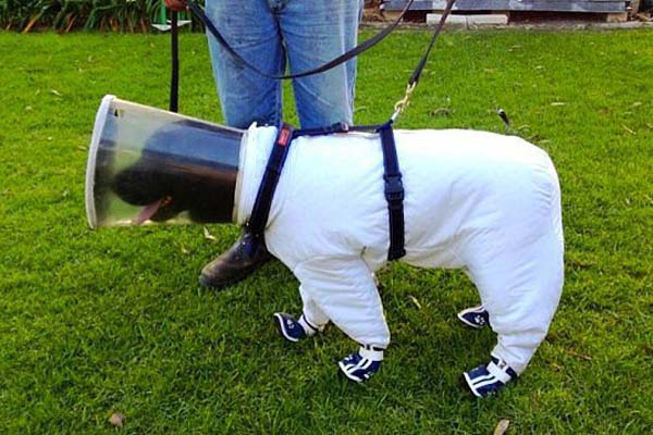 6.) This dog in a bee keeper's suit.