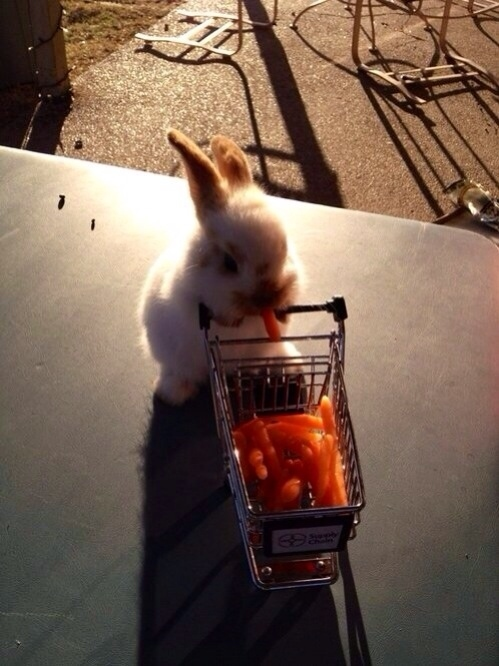 25. When this bunny went shopping for the week