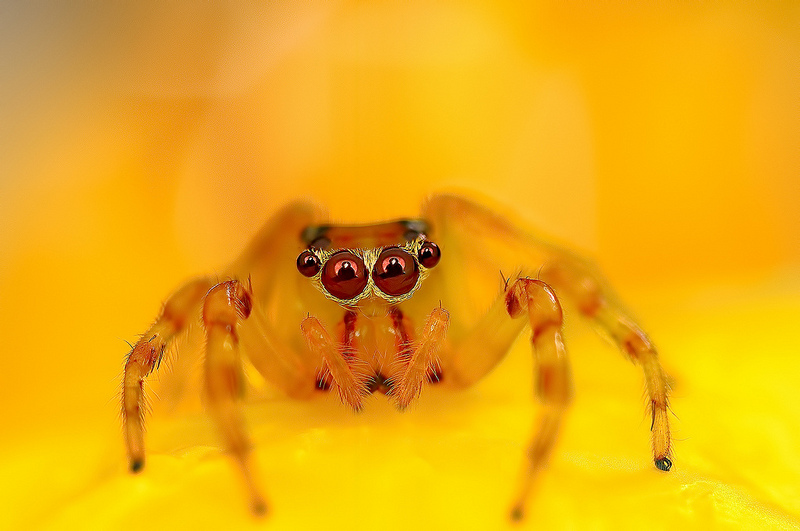Eye of the Spider