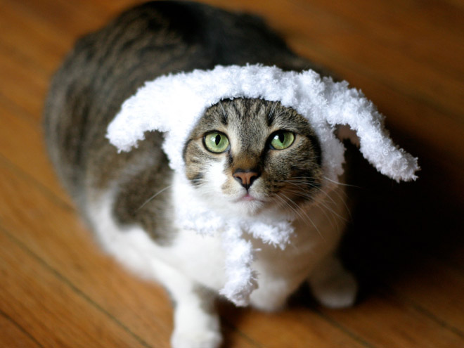 Cats with Their Lovely Hats