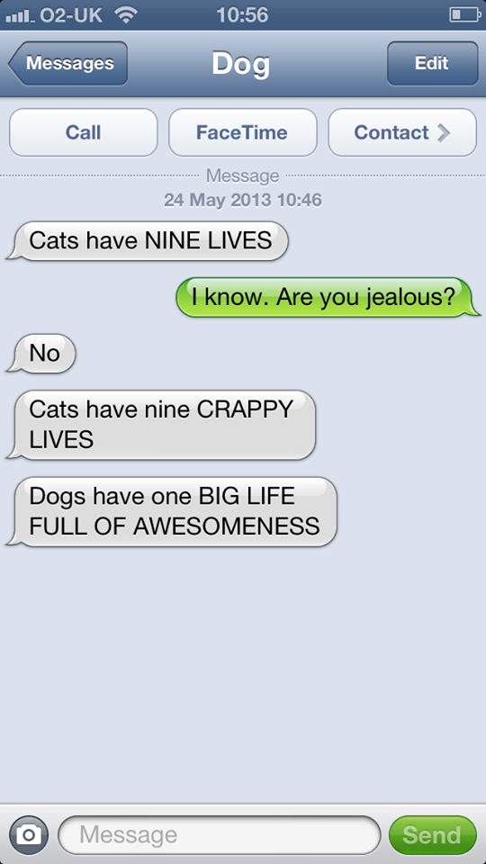 hilarious-text-message-from-dog (7)